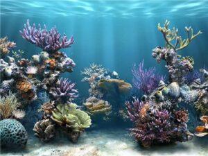 Морские круизы